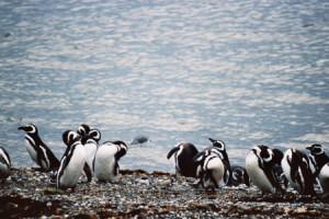 Жорж Море и пингвины
