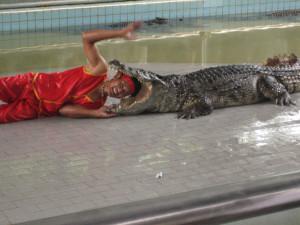 в пасти крокодила